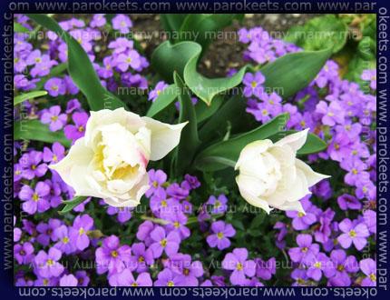 Pomlad, spring