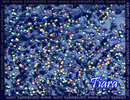 Color Club: 220 Volts and Nubar: Tiara, detail