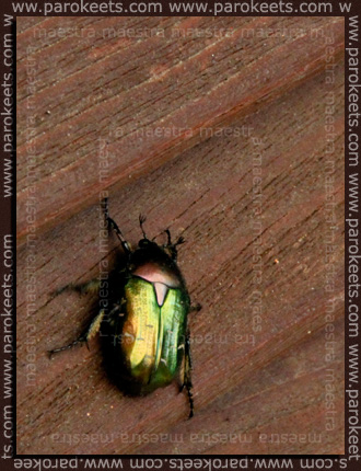 Maestra's summer vacation - Pag 2010 - beetle
