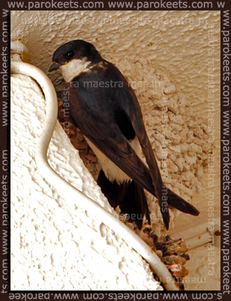 Maestra's summer vacation - Pag 2010 - swallow