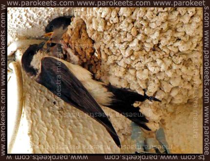Maestra's summer vacation - Pag 2010 - swallow