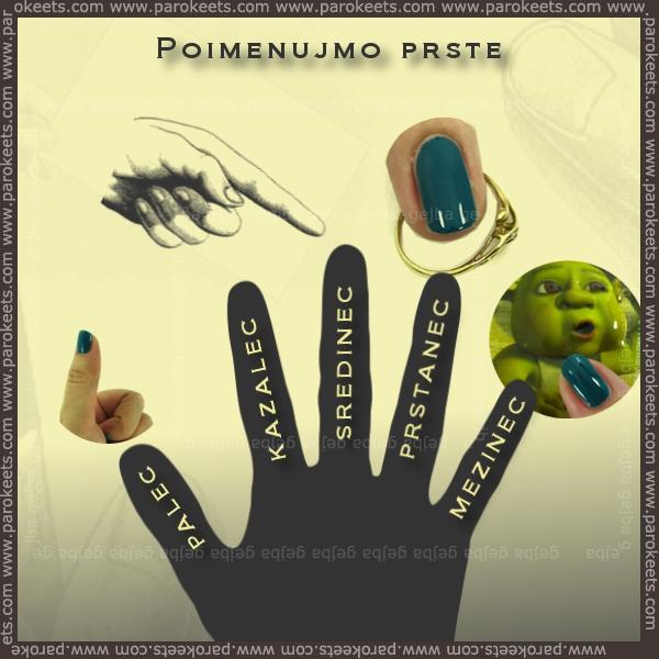 Poimenujmo prste by Parokeets