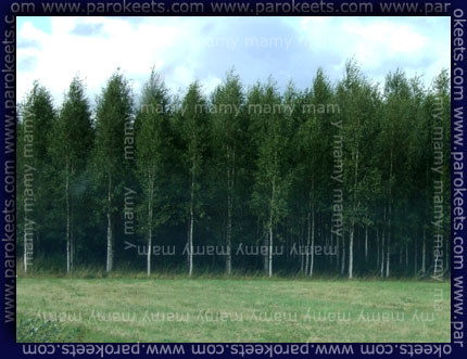 Finski gozdovi
