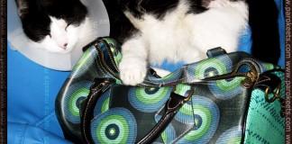 Poli loves the Desigual bag