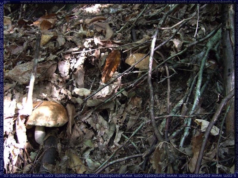 Jurcek_Mushrooms