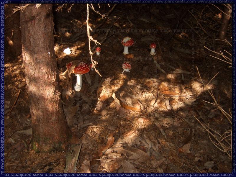 Strupene_Gobe_Poisoned_Mushrooms
