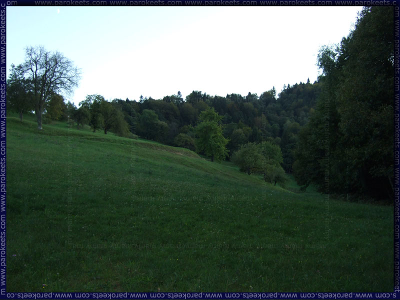 Travnik_Meadow