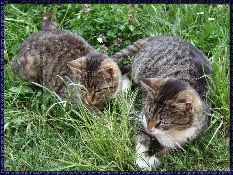 Mucki/Cats