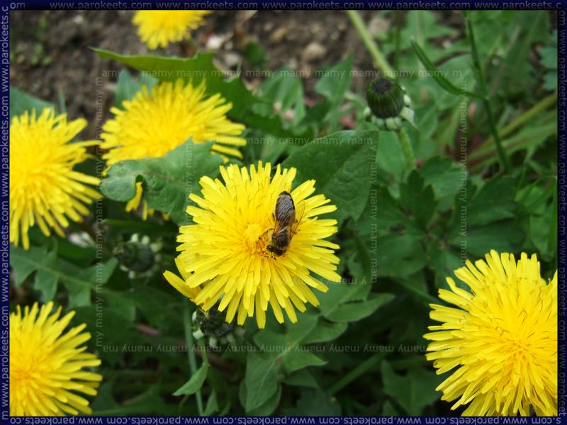 Pomlad_Spring