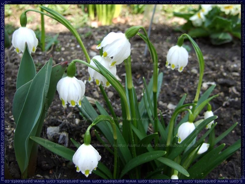 Pomlad/Spring