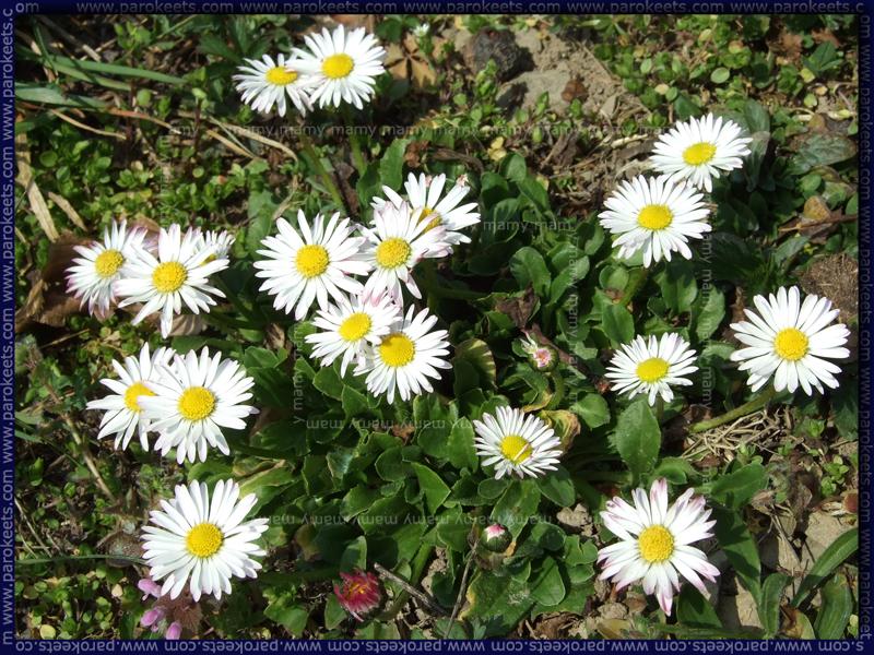 Pomlad/Spring flowers