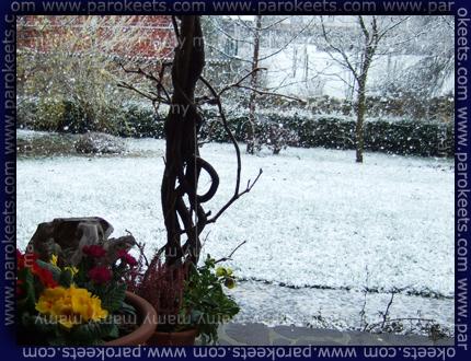 Pomlad_Sneg