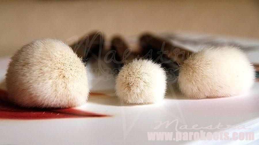 Zoeva čopiči